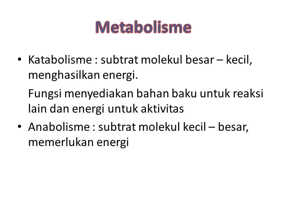 Katabolisme : subtrat molekul besar – kecil, menghasilkan energi. Fungsi menyediakan bahan baku untuk reaksi lain dan energi untuk aktivitas Anabolism