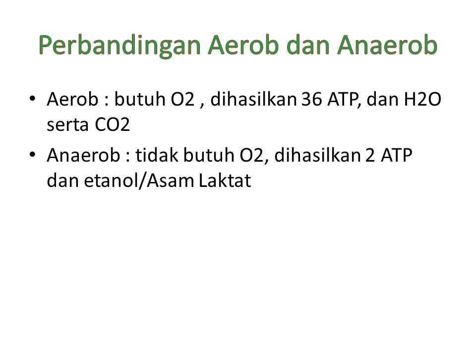 Aerob : butuh O2, dihasilkan 36 ATP, dan H2O serta CO2 Anaerob : tidak butuh O2, dihasilkan 2 ATP dan etanol/Asam Laktat