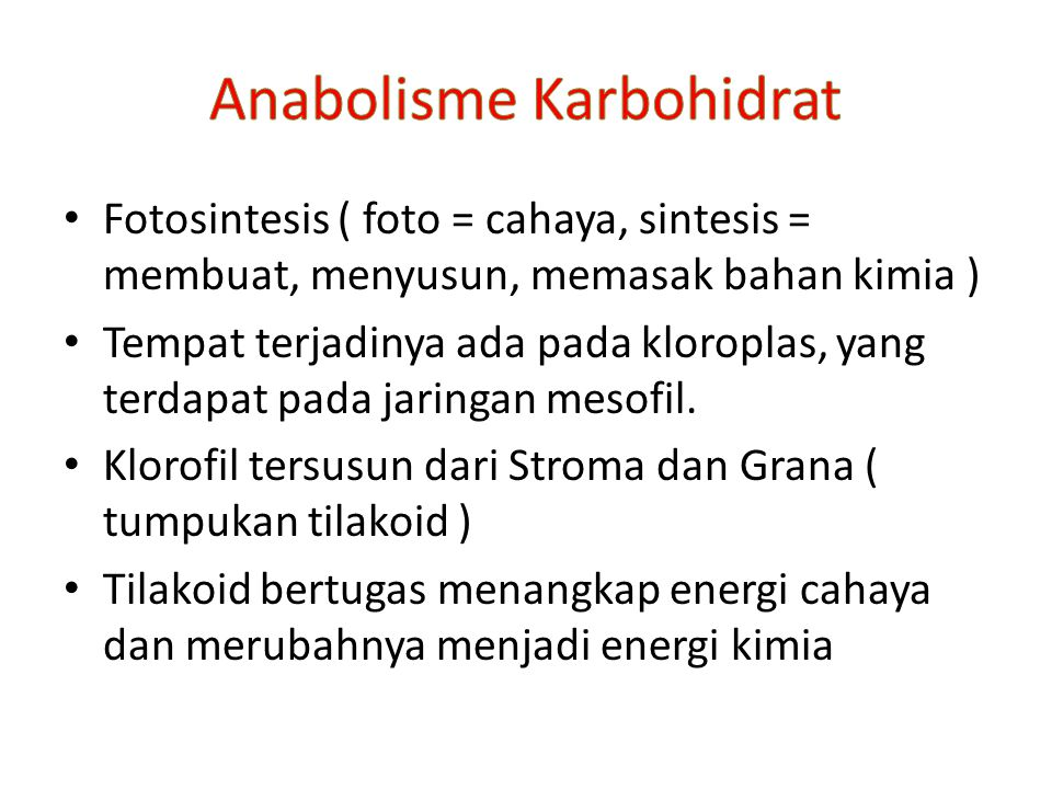 Fotosintesis ( foto = cahaya, sintesis = membuat, menyusun, memasak bahan kimia ) Tempat terjadinya ada pada kloroplas, yang terdapat pada jaringan mesofil.