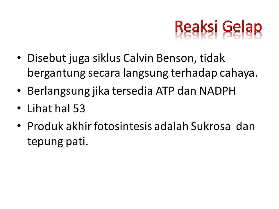Disebut juga siklus Calvin Benson, tidak bergantung secara langsung terhadap cahaya. Berlangsung jika tersedia ATP dan NADPH Lihat hal 53 Produk akhir
