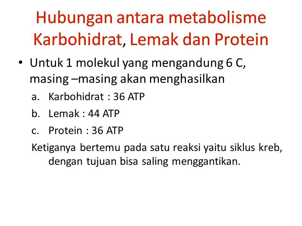 Untuk 1 molekul yang mengandung 6 C, masing –masing akan menghasilkan a.Karbohidrat : 36 ATP b.Lemak : 44 ATP c.Protein : 36 ATP Ketiganya bertemu pada satu reaksi yaitu siklus kreb, dengan tujuan bisa saling menggantikan.