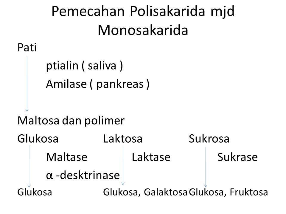 Pemecahan Polisakarida mjd Monosakarida Pati ptialin ( saliva ) Amilase ( pankreas ) Maltosa dan polimer GlukosaLaktosaSukrosa MaltaseLaktaseSukrase α -desktrinase GlukosaGlukosa, GalaktosaGlukosa, Fruktosa
