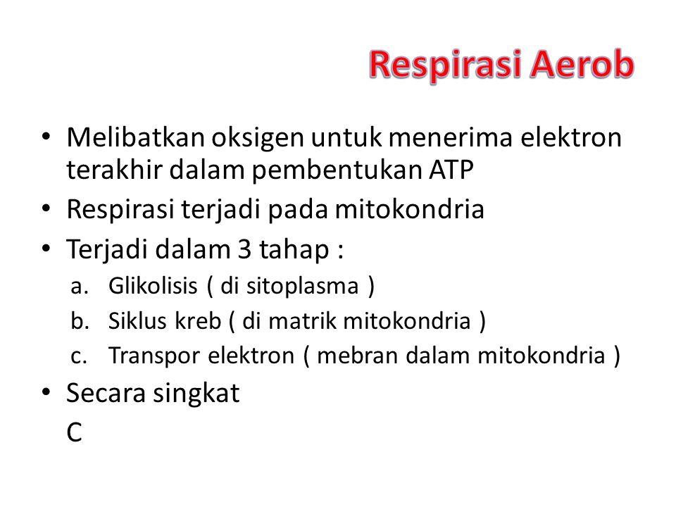Melibatkan oksigen untuk menerima elektron terakhir dalam pembentukan ATP Respirasi terjadi pada mitokondria Terjadi dalam 3 tahap : a.Glikolisis ( di