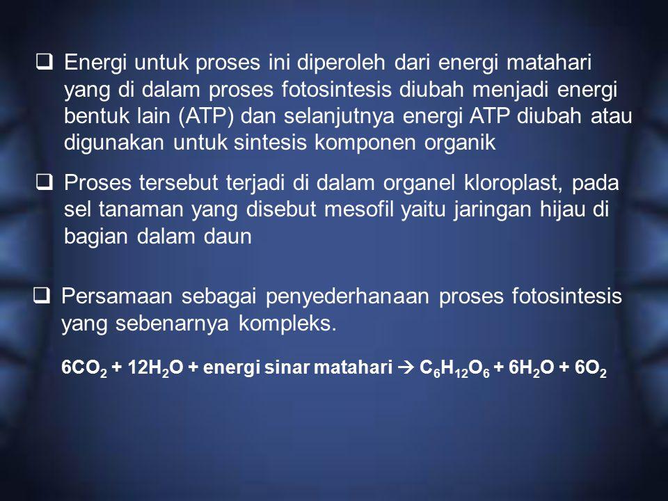  Energi untuk proses ini diperoleh dari energi matahari yang di dalam proses fotosintesis diubah menjadi energi bentuk lain (ATP) dan selanjutnya ene