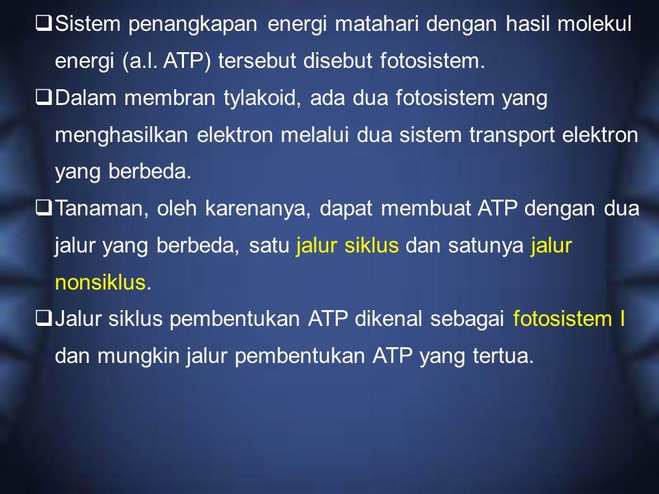  Sistem penangkapan energi matahari dengan hasil molekul energi (a.l. ATP) tersebut disebut fotosistem.  Dalam membran tylakoid, ada dua fotosistem