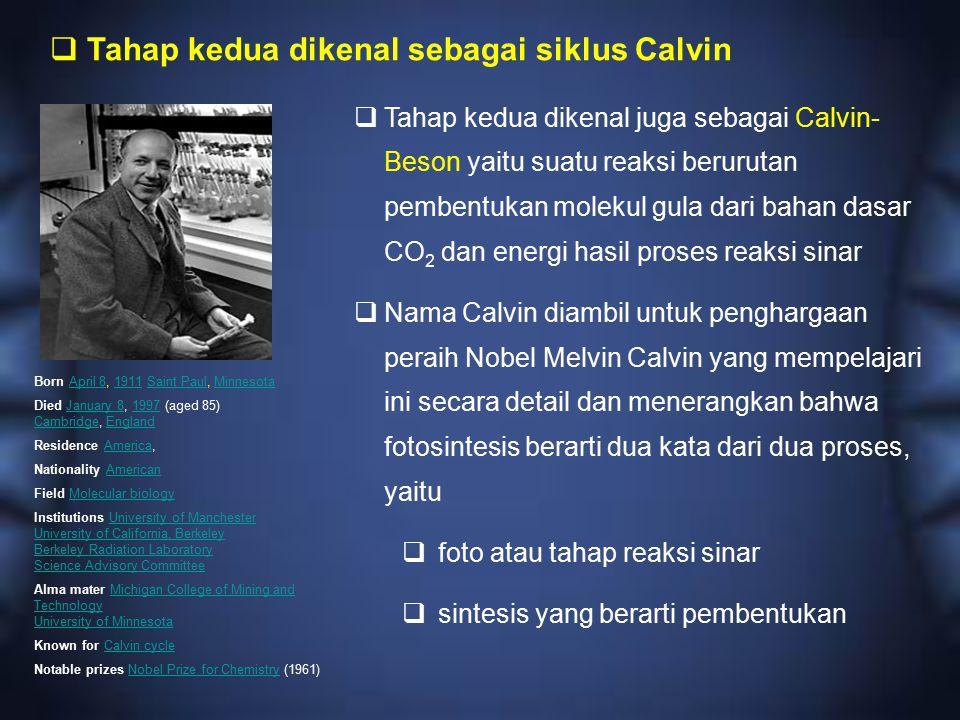  Tahap kedua dikenal juga sebagai Calvin- Beson yaitu suatu reaksi berurutan pembentukan molekul gula dari bahan dasar CO 2 dan energi hasil proses r