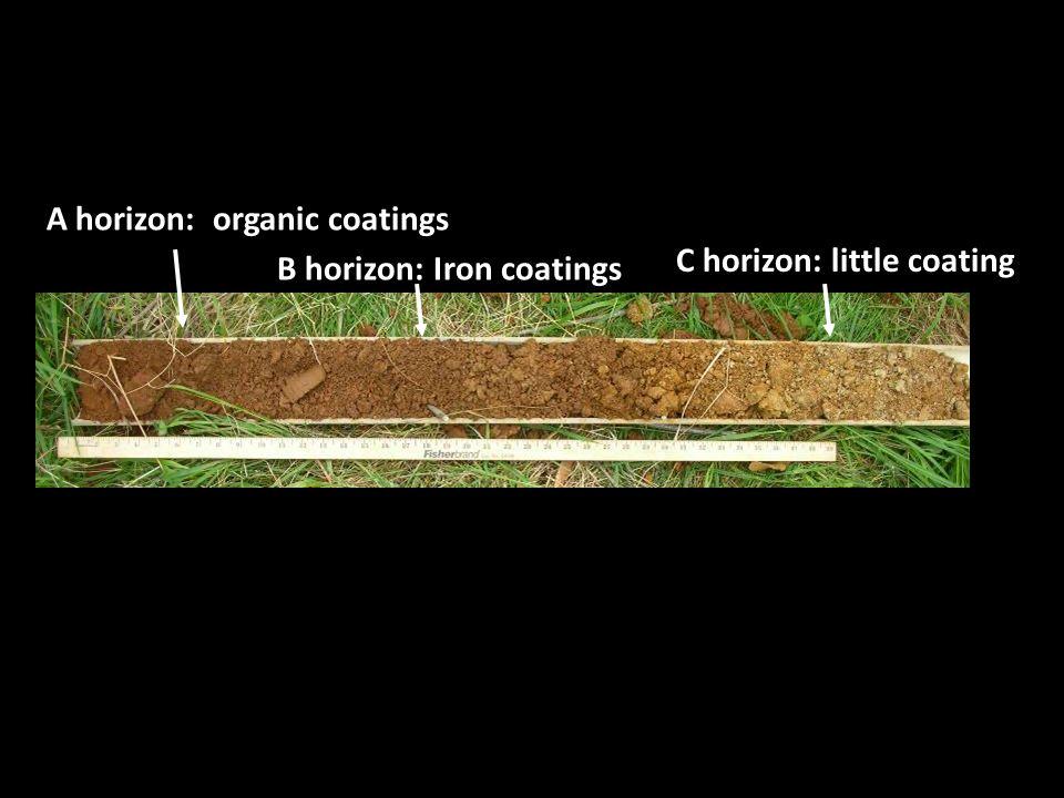 A horizon: organic coatings B horizon: Iron coatings C horizon: little coating