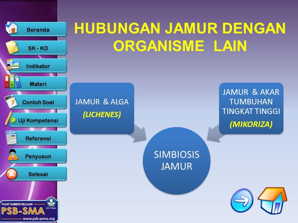 SIMBIOSIS JAMUR JAMUR & ALGA (LICHENES) JAMUR & AKAR TUMBUHAN TINGKAT TINGGI (MIKORIZA) HUBUNGAN JAMUR DENGAN ORGANISME LAIN