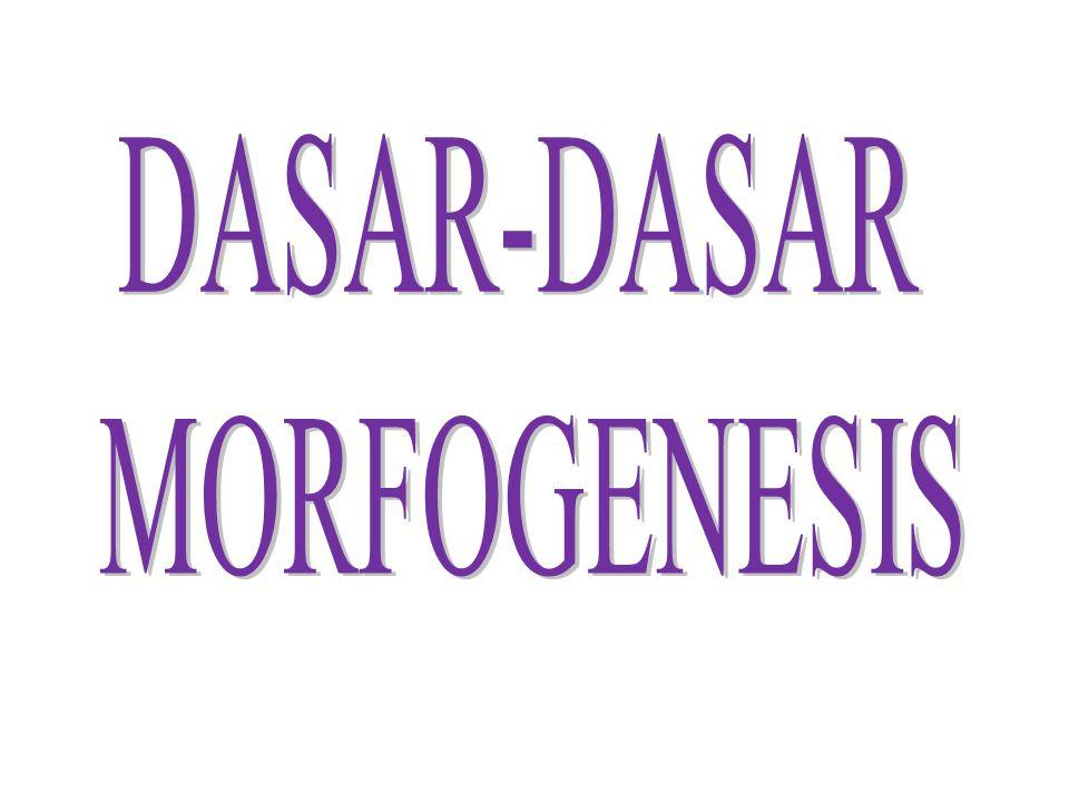 Morfogenesis  Proses biologis yang menyebabkan organisme berkembang bentuknya  Aspek dasar dari bioper: morfogenesis, tumbuh dan diferensiasi  Proses pengaturan tersebut terjadi selama perkembangan embrio menjadi organisme dewasa