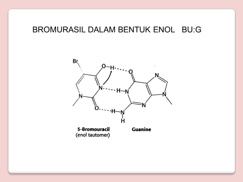 BASA ANALOG ◦ 5-Bromourasil dan 2-aminopurin bergabung pada DNA seperti asam nukleat lainnya ◦ BU = analog timin, yang berpasangan dengan A tetapi juga dapat berpasangan dengan G ◦ Terjadi mutasi dari A:T menjadi G:C