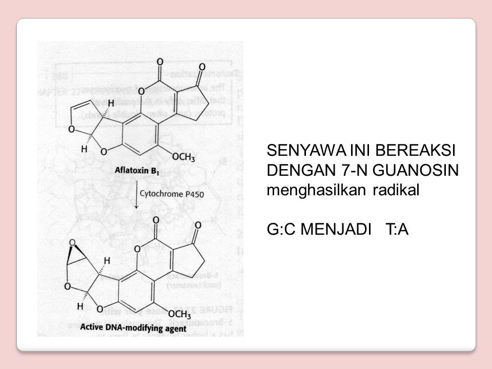 AFLATOKSIN B1 AFLATOKSIN B1 OLEH SITOKROM P450 DIUBAH MENJADI SENYAWA EPOKSID YG BEREAKSI DENGAN G G:C MENJADI T:A