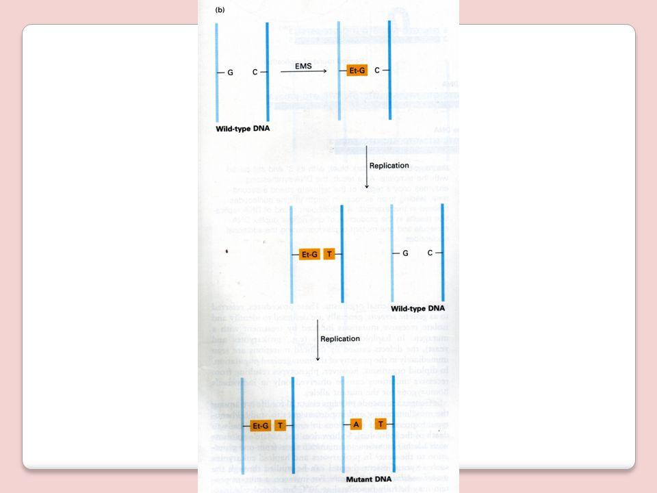 Etil Metil Sulfoksida (EMS)