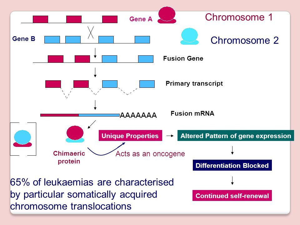 HUNTINGTON DISEASE CAG : GLUTAMIN PENDERITA 36 -82 KOPI Fagile X syndrome: berpengaruh pada sistem regulasinya