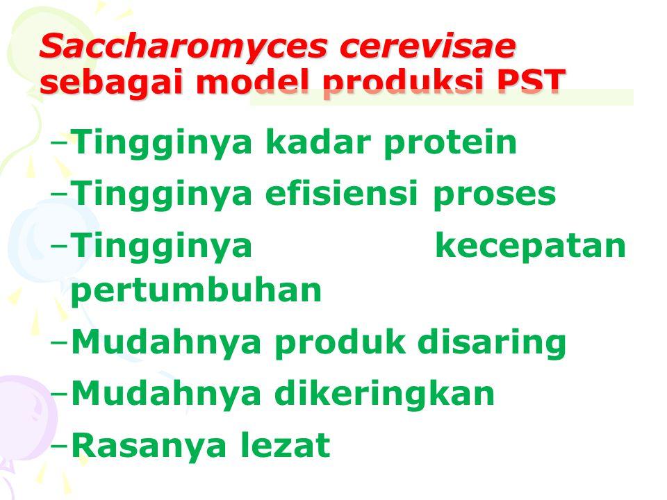 Saccharomyces cerevisae sebagai model produksi PST –Tingginya kadar protein –Tingginya efisiensi proses –Tingginya kecepatan pertumbuhan –Mudahnya pro