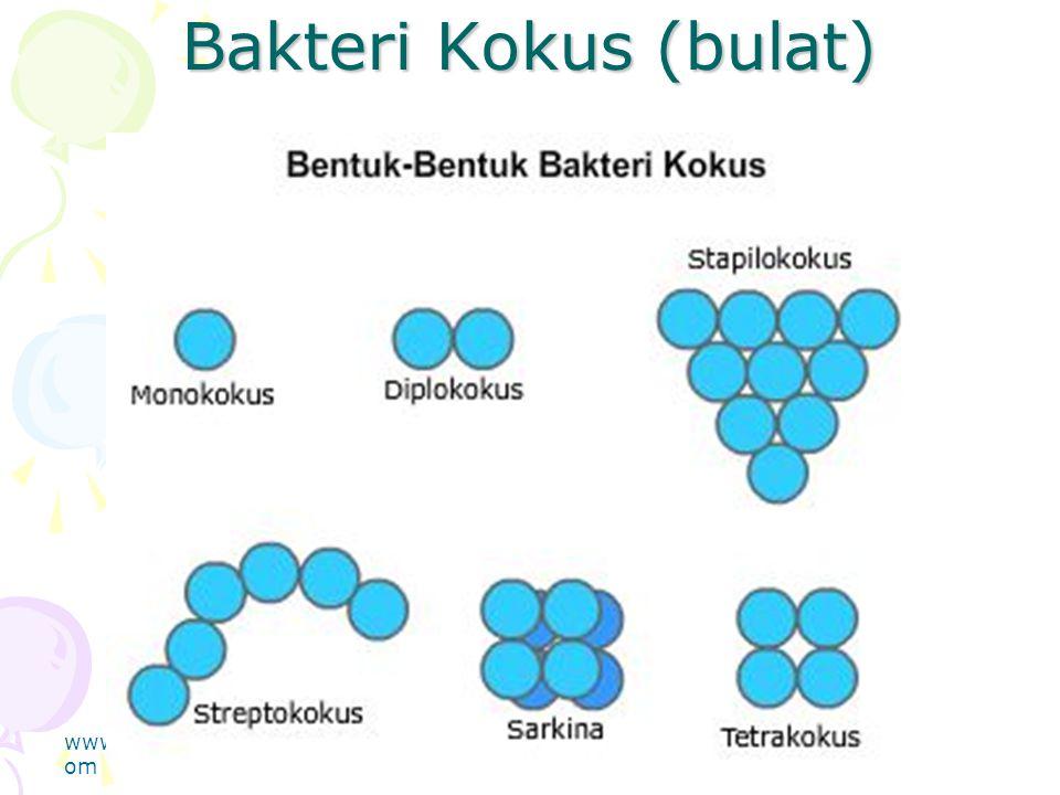 Bakteri Kokus (bulat) www.thmemgallery.c om Company Logo