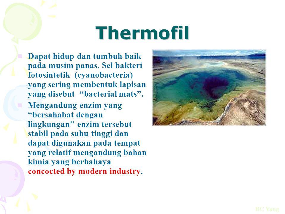 "Thermofil Dapat hidup dan tumbuh baik pada musim panas. Sel bakteri fotosintetik (cyanobacteria) yang sering membentuk lapisan yang disebut ""bacterial"
