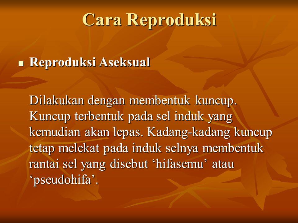 Cara Reproduksi Reproduksi Aseksual Reproduksi Aseksual Dilakukan dengan membentuk kuncup.