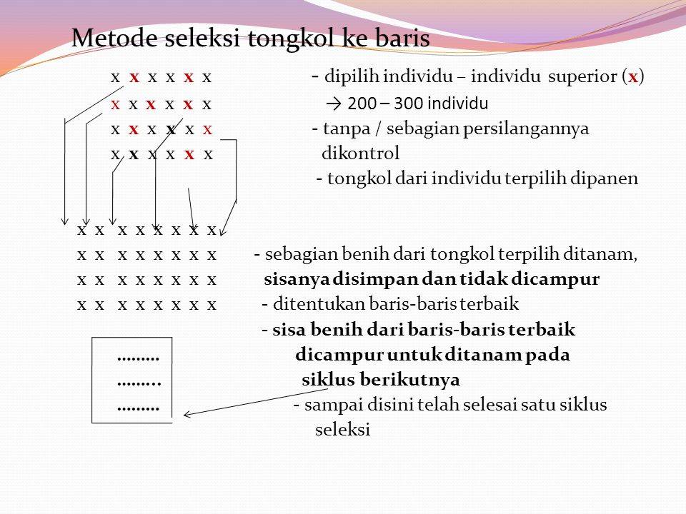Metode seleksi tongkol ke baris x x x x x x - dipilih individu – individu superior (x) x x x x x x → 200 – 300 individu x x x x x x - tanpa / sebagian