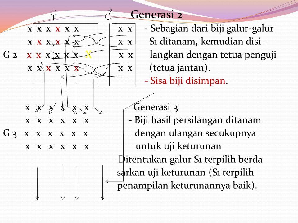 ♀ ♂ Generasi 2 x x x x x x x x - Sebagian dari biji galur-galur x x x x x x x x S1 ditanam, kemudian disi – G 2 x x x x x x X x x langkan dengan tetua