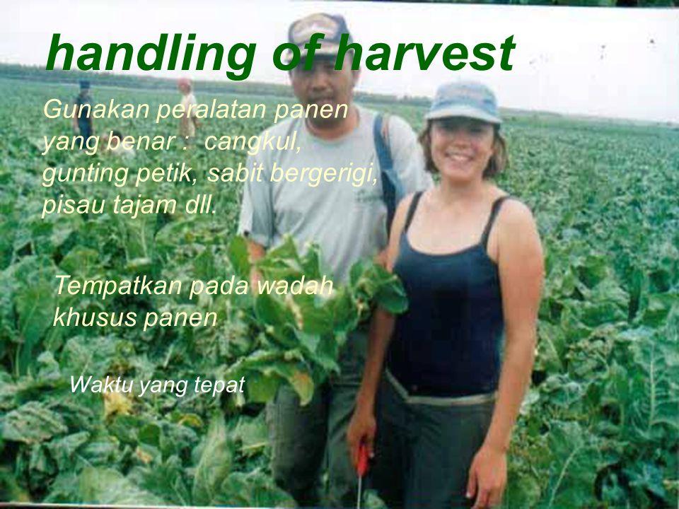 handling of harvest Gunakan peralatan panen yang benar : cangkul, gunting petik, sabit bergerigi, pisau tajam dll.