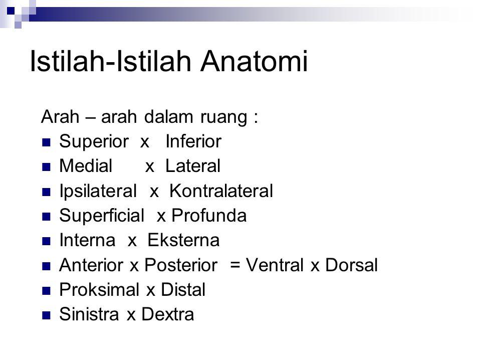 Istilah-Istilah Anatomi Arah – arah dalam ruang : Superior x Inferior Medial x Lateral Ipsilateral x Kontralateral Superficial x Profunda Interna x Ek