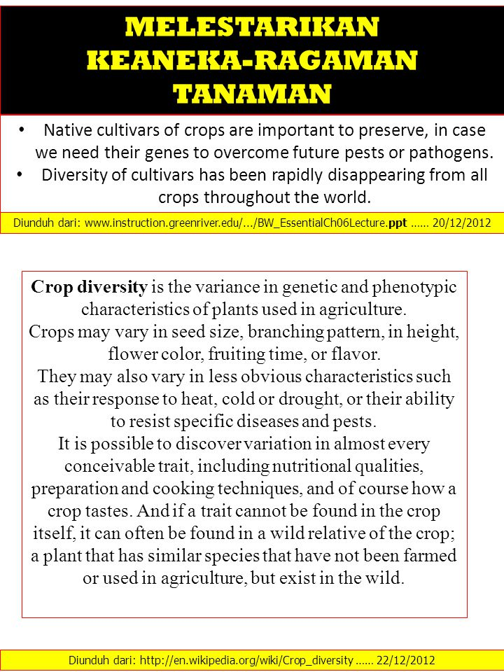 Native cultivars of crops are important to preserve, in case we need their genes to overcome future pests or pathogens.