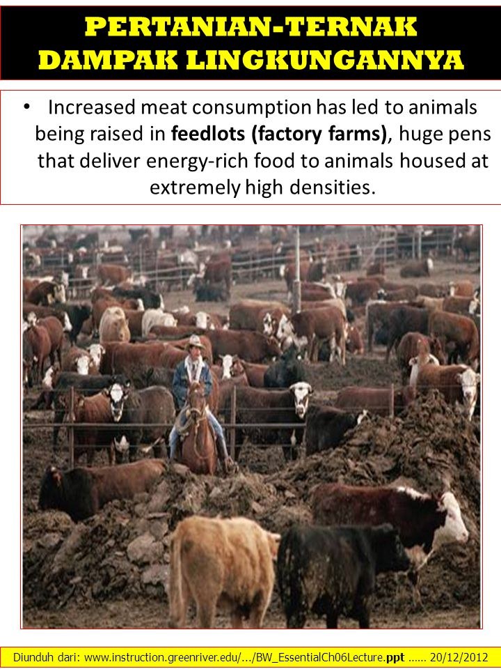Increased meat consumption has led to animals being raised in feedlots (factory farms), huge pens that deliver energy-rich food to animals housed at e