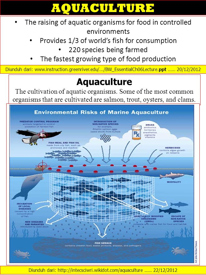 The raising of aquatic organisms for food in controlled environments Provides 1/3 of world's fish for consumption 220 species being farmed The fastest