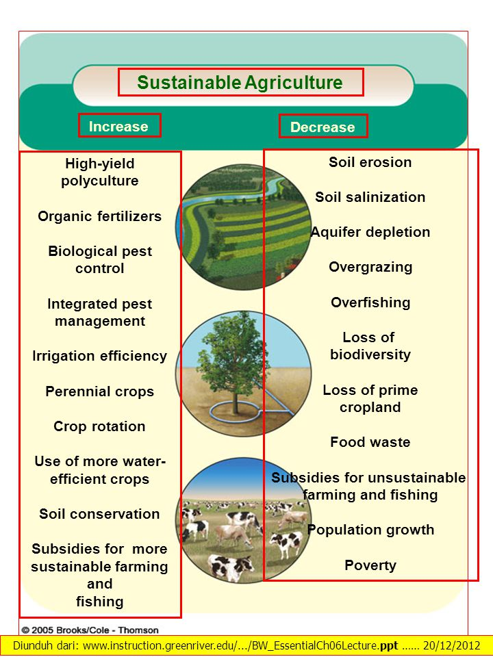 High-yield polyculture Organic fertilizers Biological pest control Integrated pest management Irrigation efficiency Perennial crops Crop rotation Use of more water- efficient crops Soil conservation Subsidies for more sustainable farming and fishing Increase Soil erosion Soil salinization Aquifer depletion Overgrazing Overfishing Loss of biodiversity Loss of prime cropland Food waste Subsidies for unsustainable farming and fishing Population growth Poverty Decrease Sustainable Agriculture Diunduh dari: www.instruction.greenriver.edu/.../BW_EssentialCh06Lecture.ppt …… 20/12/2012