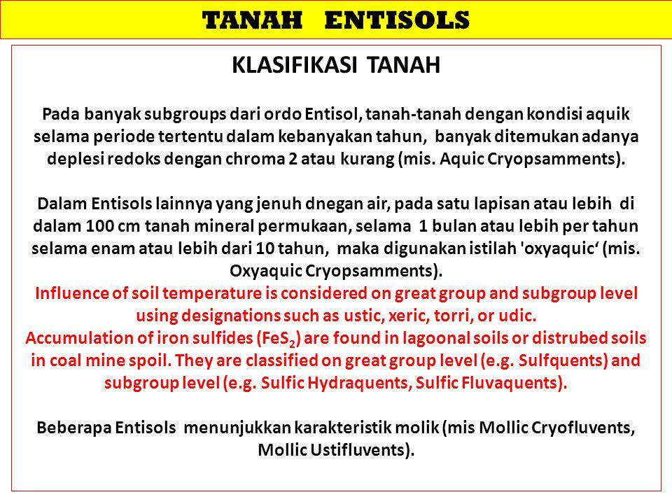 TANAH ENTISOLS KLASIFIKASI TANAH Pada banyak subgroups dari ordo Entisol, tanah-tanah dengan kondisi aquik selama periode tertentu dalam kebanyakan ta