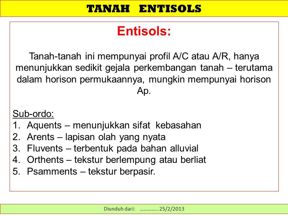 TANAH ENTISOLS Entisols: Tanah-tanah ini mempunyai profil A/C atau A/R, hanya menunjukkan sedikit gejala perkembangan tanah – terutama dalam horison p
