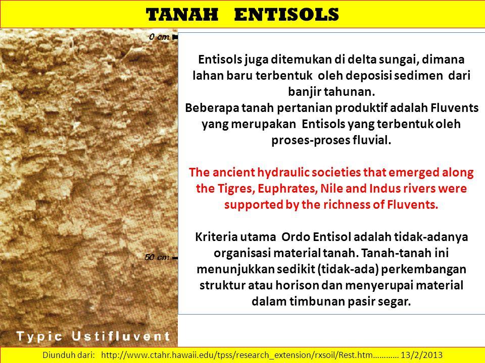 TANAH ENTISOLS Diunduh dari: http://www.ctahr.hawaii.edu/tpss/research_extension/rxsoil/Rest.htm………… 13/2/2013 Entisols juga ditemukan di delta sungai
