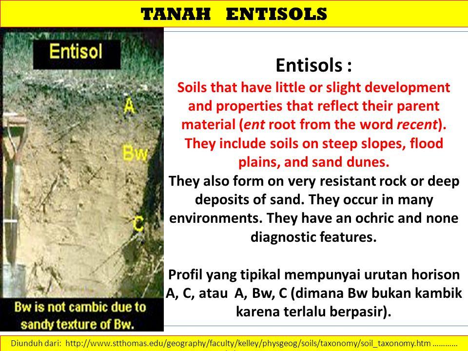 TANAH ENTISOLS Diunduh dari: http://www.stthomas.edu/geography/faculty/kelley/physgeog/soils/taxonomy/soil_taxonomy.htm ………… 14/2/2013 Entisols : Soil