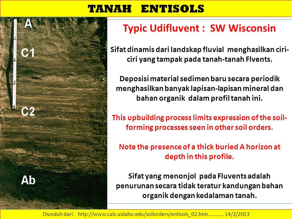 TANAH ENTISOLS Diunduh dari: http://www.cals.uidaho.edu/soilorders/entisols_02.htm………… 14/2/2013 Typic Udifluvent : SW Wisconsin Sifat dinamis dari la