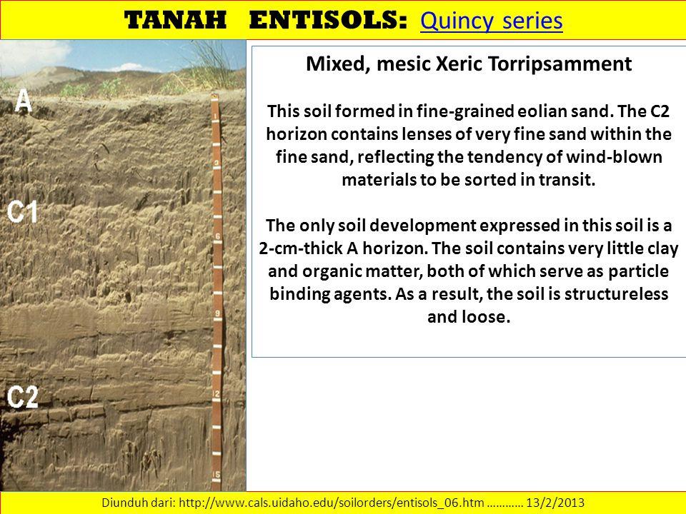 TANAH ENTISOLS: Quincy series Quincy series Diunduh dari: http://www.cals.uidaho.edu/soilorders/entisols_06.htm ………… 13/2/2013 Mixed, mesic Xeric Torr