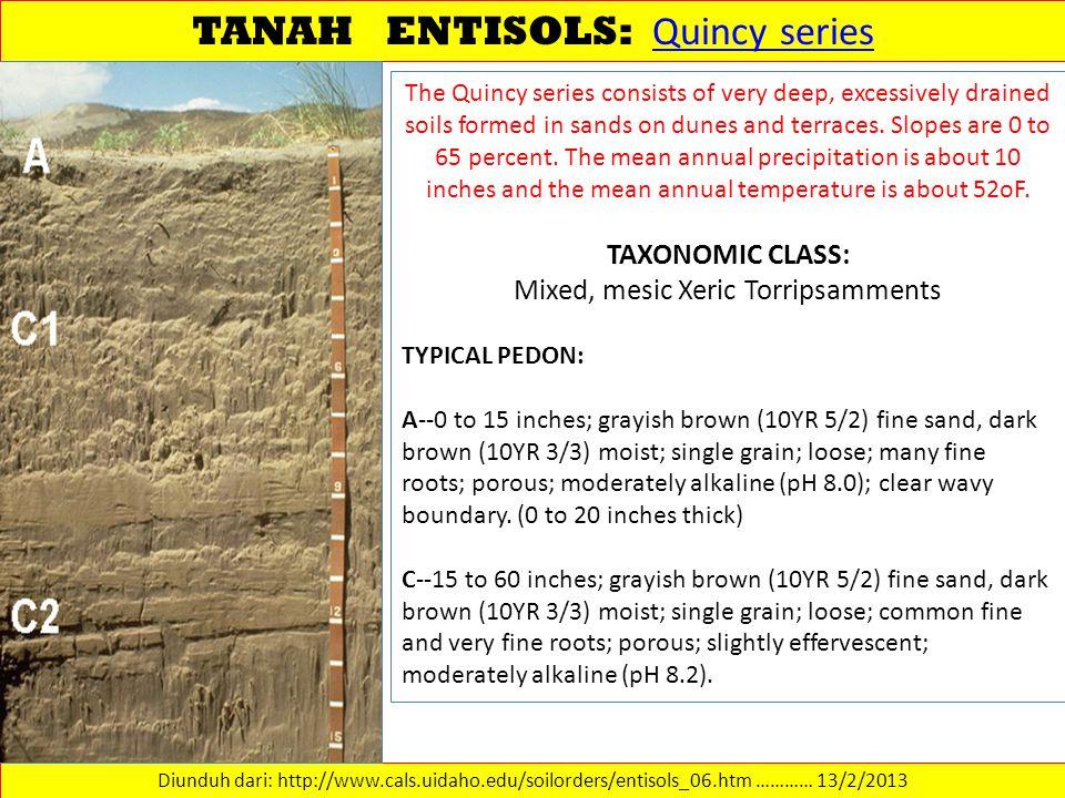 TANAH ENTISOLS: Quincy series Quincy series Diunduh dari: http://www.cals.uidaho.edu/soilorders/entisols_06.htm ………… 13/2/2013 The Quincy series consi