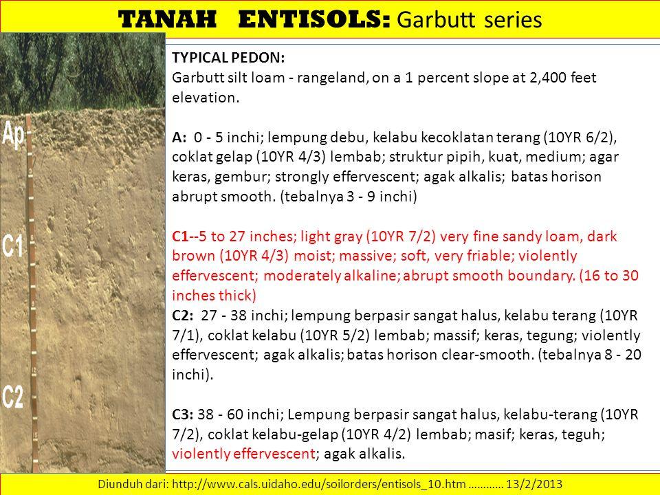 TANAH ENTISOLS: Garbutt series Diunduh dari: http://www.cals.uidaho.edu/soilorders/entisols_10.htm ………… 13/2/2013 TYPICAL PEDON: Garbutt silt loam - r