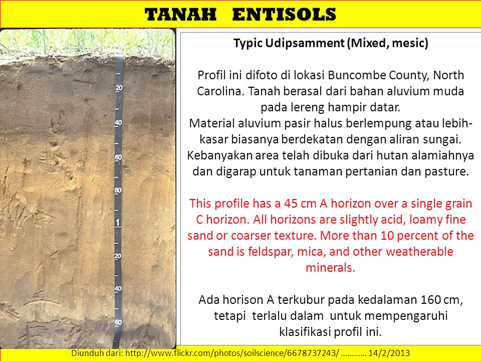TANAH ENTISOLS Diunduh dari: http://www.flickr.com/photos/soilscience/6678737243/ ………… 14/2/2013 Typic Udipsamment (Mixed, mesic) Profil ini difoto di