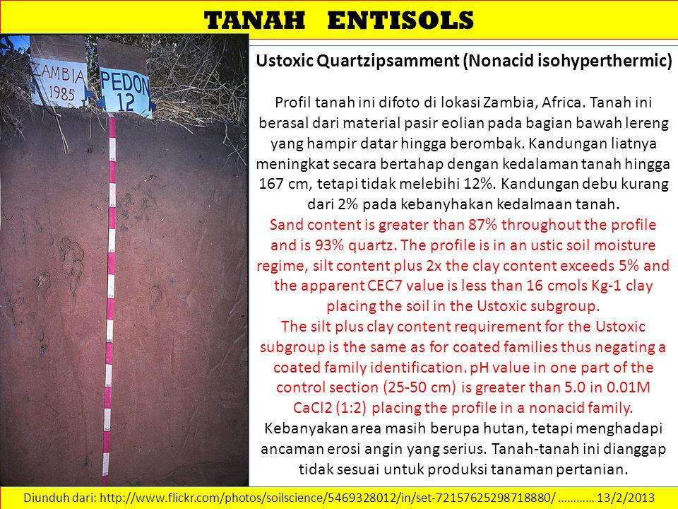 TANAH ENTISOLS Diunduh dari: http://www.flickr.com/photos/soilscience/5469328012/in/set-72157625298718880/ ………… 13/2/2013 Ustoxic Quartzipsamment (Non
