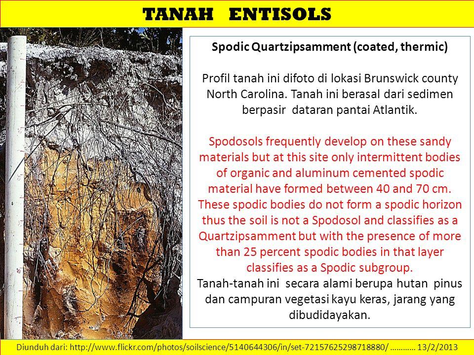 TANAH ENTISOLS Diunduh dari: http://www.flickr.com/photos/soilscience/5140644306/in/set-72157625298718880/ ………… 13/2/2013 Spodic Quartzipsamment (coat