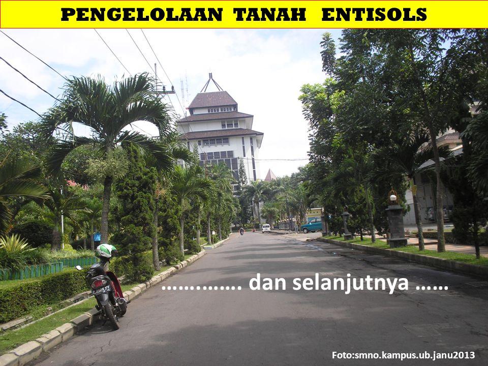 PENGELOLAAN TANAH ENTISOLS Foto:smno.kampus.ub.janu2013 …….……. dan selanjutnya ……