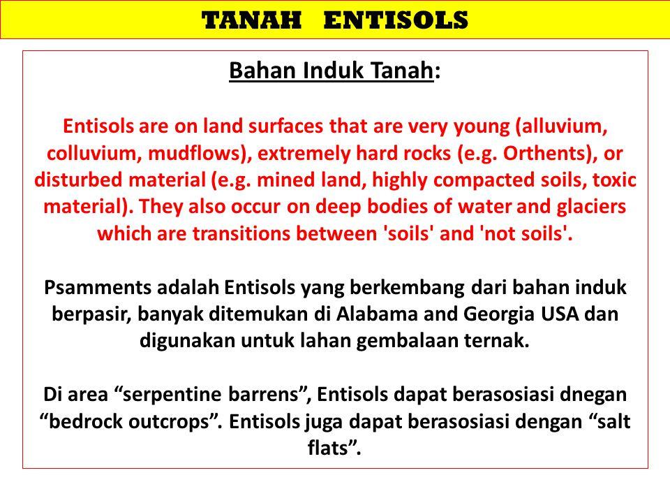 PENGELOLAAN TANAH ENTISOLS Diunduh dari: 124.81.86.163/ojs/index.php/jti/article/.../185 -………… 14/2/2013 Jurnal Tanah dan Iklim No.