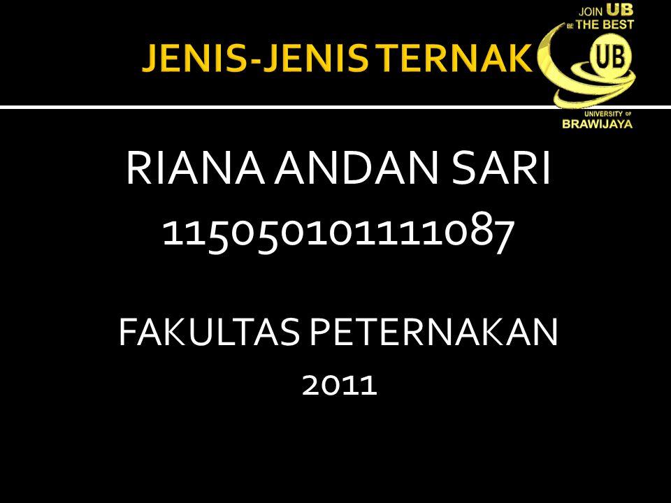 RIANA ANDAN SARI 115050101111087 FAKULTAS PETERNAKAN 2011