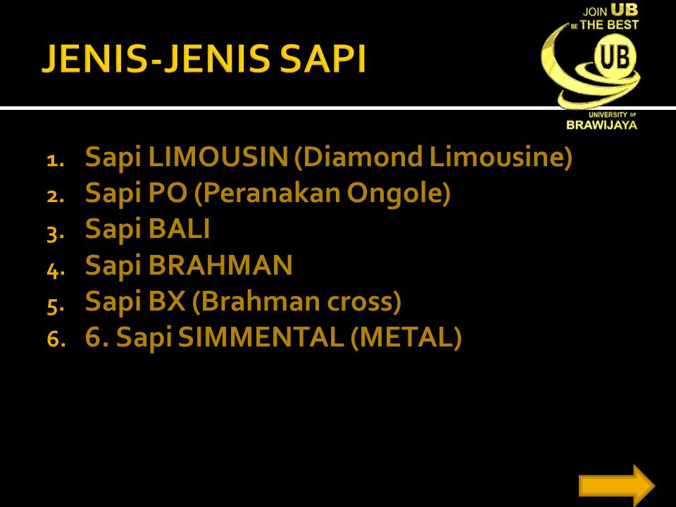 1. Sapi LIMOUSIN (Diamond Limousine) 2. Sapi PO (Peranakan Ongole) 3. Sapi BALI 4. Sapi BRAHMAN 5. Sapi BX (Brahman cross) 6. 6. Sapi SIMMENTAL (METAL