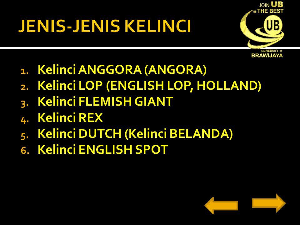1. Kelinci ANGGORA (ANGORA) 2. Kelinci LOP (ENGLISH LOP, HOLLAND) 3. Kelinci FLEMISH GIANT 4. Kelinci REX 5. Kelinci DUTCH (Kelinci BELANDA) 6. Kelinc