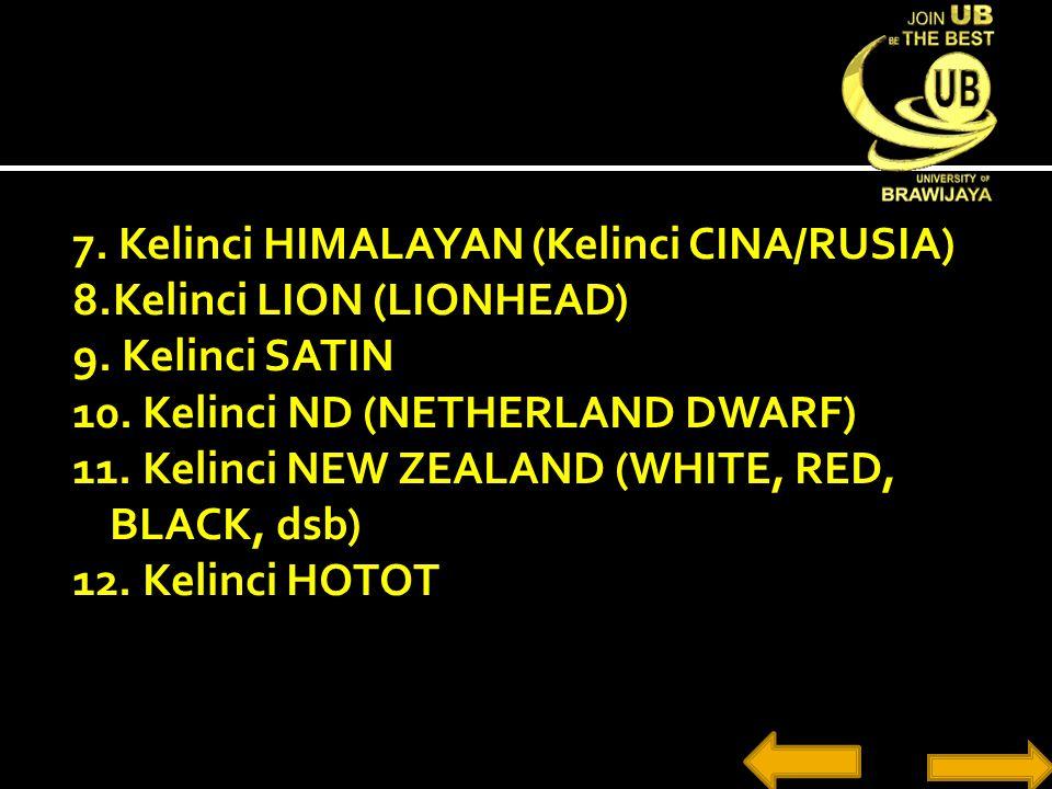 7. Kelinci HIMALAYAN (Kelinci CINA/RUSIA) 8.Kelinci LION (LIONHEAD) 9. Kelinci SATIN 10. Kelinci ND (NETHERLAND DWARF) 11. Kelinci NEW ZEALAND (WHITE,