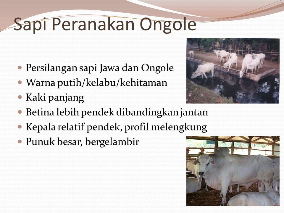 Sapi Peranakan Ongole Persilangan sapi Jawa dan Ongole Warna putih/kelabu/kehitaman Kaki panjang Betina lebih pendek dibandingkan jantan Kepala relatif pendek, profil melengkung Punuk besar, bergelambir