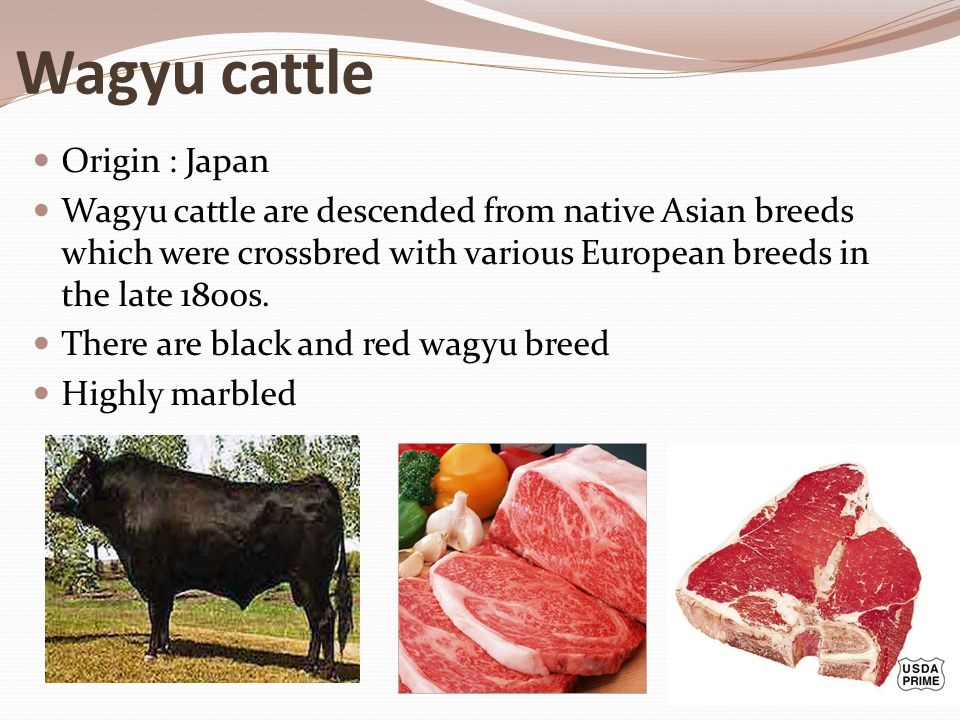 Wagyu cattle Origin : Japan Wagyu cattle are descended from native Asian breeds which were crossbred with various European breeds in the late 1800s. T