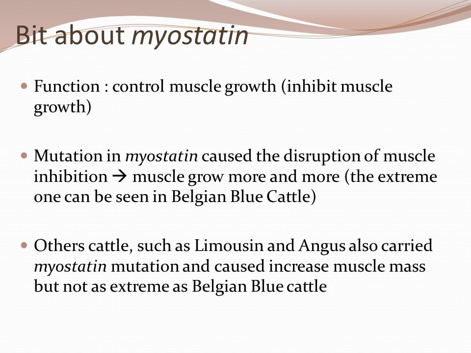 Bit about myostatin Function : control muscle growth (inhibit muscle growth) Mutation in myostatin caused the disruption of muscle inhibition  muscle
