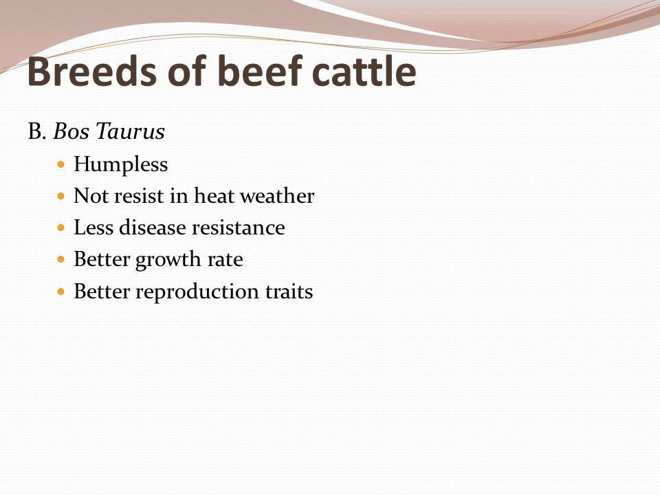 Breeds of beef cattle B. Bos Taurus Humpless Not resist in heat weather Less disease resistance Better growth rate Better reproduction traits